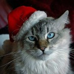 Cute Christmas Animals 19