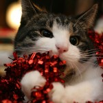 Cute Christmas Animals 20