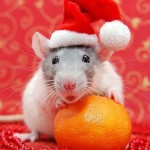 Cute Christmas Animals 21