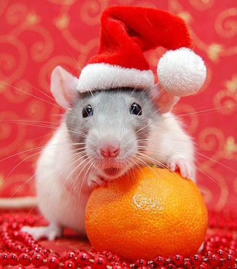 Cute Christmas Animals 21 55 Pictures of Funny Animals Cutely Enjoying Christmas