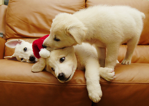 Cute Christmas Animals 22 55 Pictures of Funny Animals Cutely Enjoying Christmas