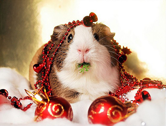 Cute Christmas Animals 23 55 Pictures of Funny Animals Cutely Enjoying Christmas