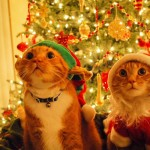 Cute Christmas Animals 24