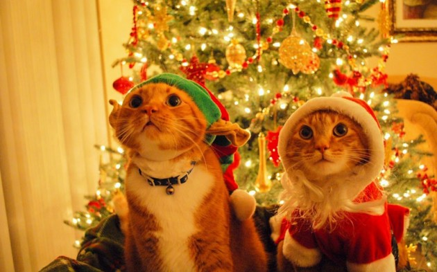Cute Christmas Animals 24 630x393 55 Pictures of Funny Animals Cutely Enjoying Christmas