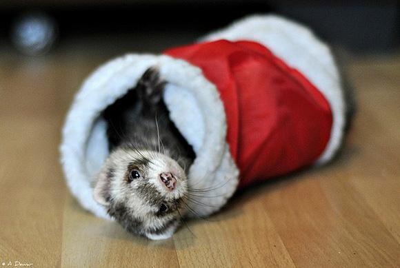 Cute christmas animals - photo#27