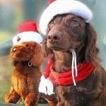 Cute Christmas Animals 26