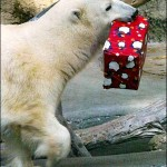 Cute Christmas Animals 27