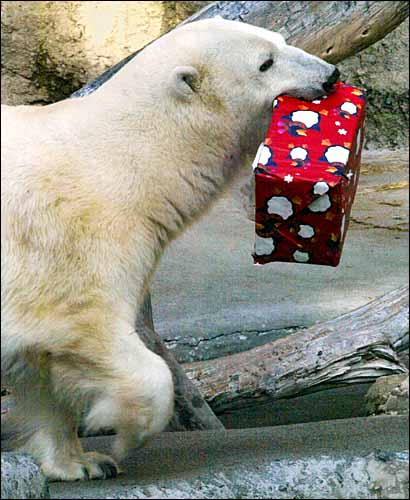 Cute Christmas Animals 27 55 Pictures of Funny Animals Cutely Enjoying Christmas