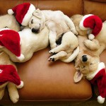 Cute Christmas Animals 28