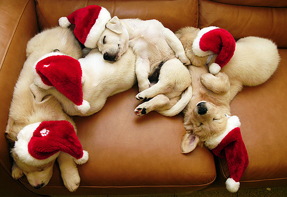 Cute Christmas Animals 28 55 Pictures of Funny Animals Cutely Enjoying Christmas