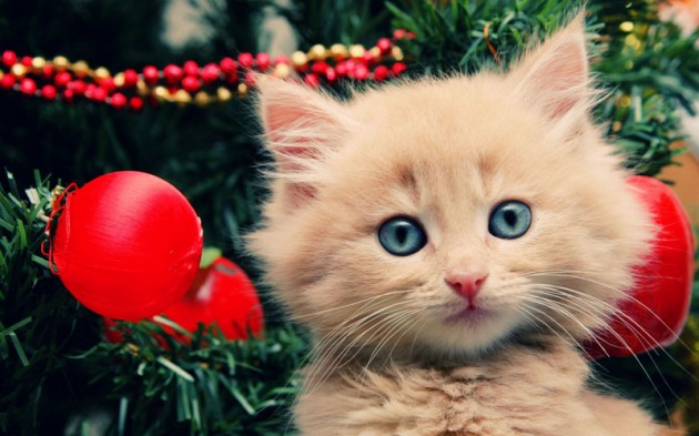 Cute Christmas Animals 29 630x393 55 Pictures of Funny Animals Cutely Enjoying Christmas