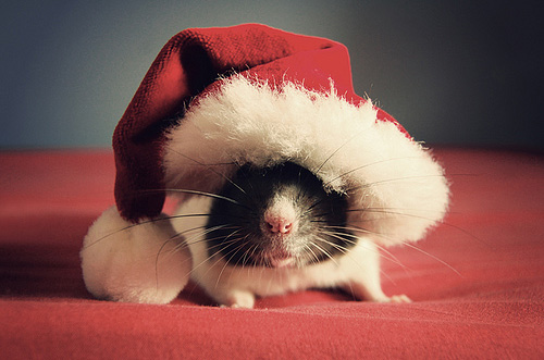 Cute Christmas Animals 30 55 Pictures of Funny Animals Cutely Enjoying Christmas