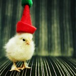 Cute Christmas Animals 32