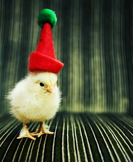 Cute Christmas Animals 32 55 Pictures of Funny Animals Cutely Enjoying Christmas