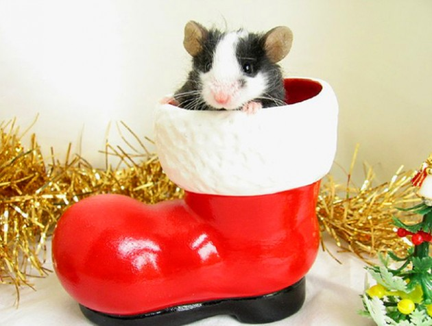 Cute Christmas Animals 33 630x476 55 Pictures of Funny Animals Cutely Enjoying Christmas
