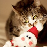 Cute Christmas Animals 34