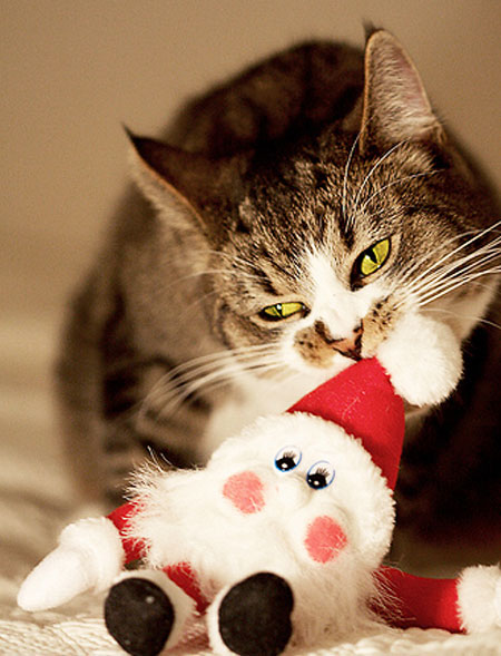 Cute Christmas Animals 34 55 Pictures of Funny Animals Cutely Enjoying Christmas