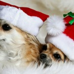 Cute Christmas Animals 35