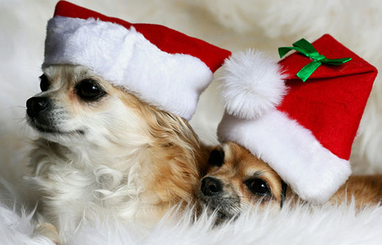 Cute Christmas Animals 35 55 Pictures of Funny Animals Cutely Enjoying Christmas