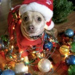 Cute Christmas Animals 36