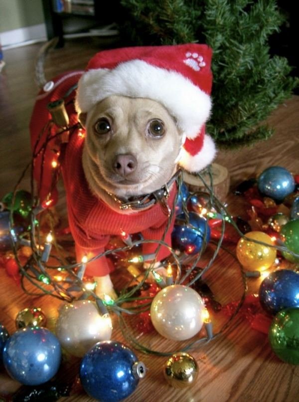 Cute Christmas Animals 36 55 Pictures of Funny Animals Cutely Enjoying Christmas