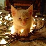 Cute Christmas Animals 37