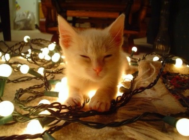 Cute Christmas Animals 37 630x466 55 Pictures of Funny Animals Cutely Enjoying Christmas