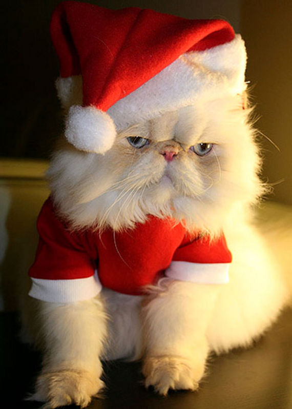 Cute Christmas Animals 38 55 Pictures of Funny Animals Cutely Enjoying Christmas