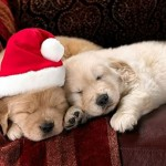 Cute Christmas Animals 39
