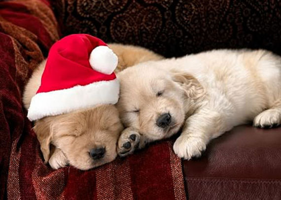 Cute Christmas Animals 39 55 Pictures of Funny Animals Cutely Enjoying Christmas