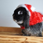 Cute Christmas Animals 40