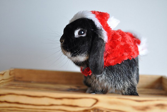 Cute Christmas Animals 40 55 Pictures of Funny Animals Cutely Enjoying Christmas