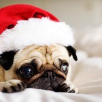 Cute Christmas Animals 41
