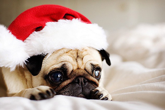 Cute Christmas Animals 41 55 Pictures of Funny Animals Cutely Enjoying Christmas