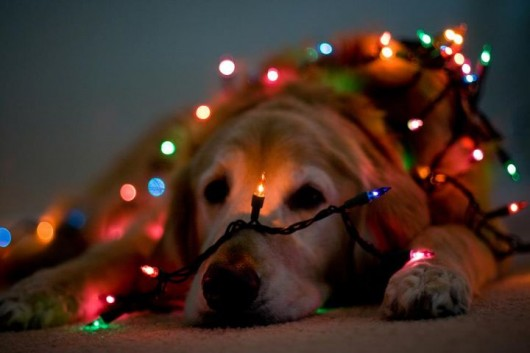 Cute Christmas Animals 42 55 Pictures of Funny Animals Cutely Enjoying Christmas