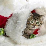 Cute Christmas Animals 44