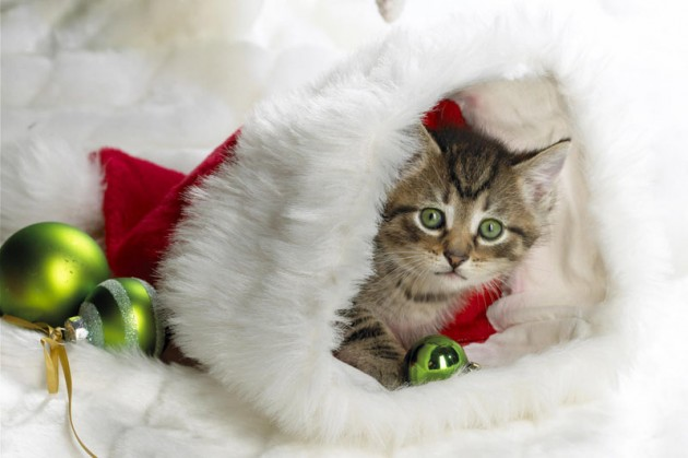 Cute Christmas Animals 44 630x419 55 Pictures of Funny Animals Cutely Enjoying Christmas