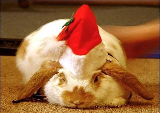 Cute christmas animals - photo#16