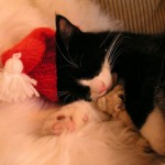 Cute Christmas Animals 46