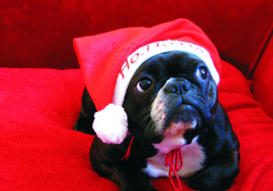 Cute Christmas Animals 47 55 Pictures of Funny Animals Cutely Enjoying Christmas