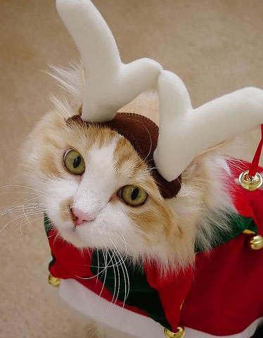 Cute Christmas Animals 49 55 Pictures of Funny Animals Cutely Enjoying Christmas