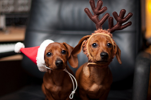 Cute Christmas Animals 51 55 Pictures of Funny Animals Cutely Enjoying Christmas