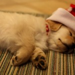 Cute Christmas Animals 52
