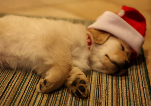 Cute Christmas Animals 52 55 Pictures of Funny Animals Cutely Enjoying Christmas