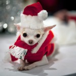 Cute Christmas Animals 55