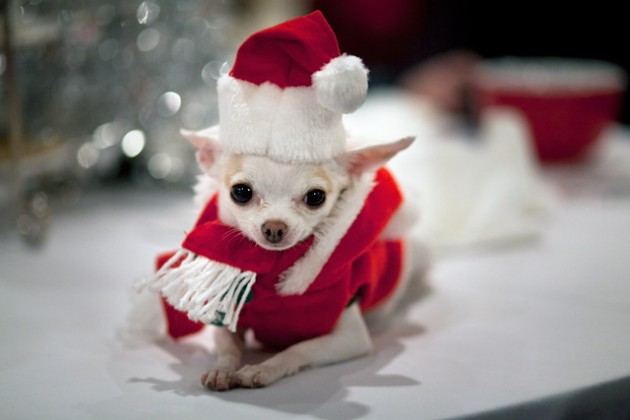 Cute Christmas Animals 55 630x420 55 Pictures of Funny Animals Cutely Enjoying Christmas