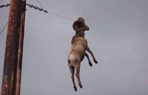 Hangin like a boss
