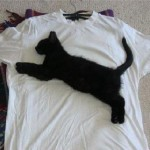 Real puma tshirt