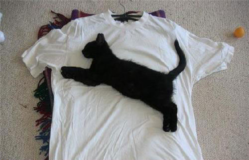 Real puma tshirt WTF Pic Dump   Photos in Extreme Need of Context