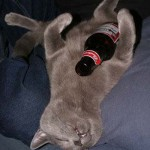 All wasted cat